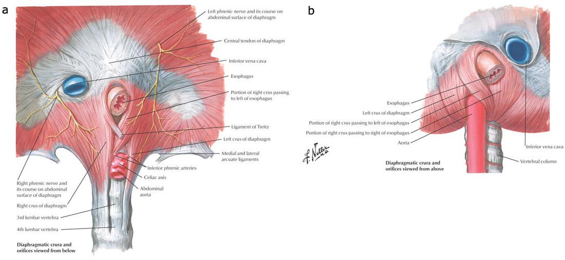 Pathology Outlines - Anatomy